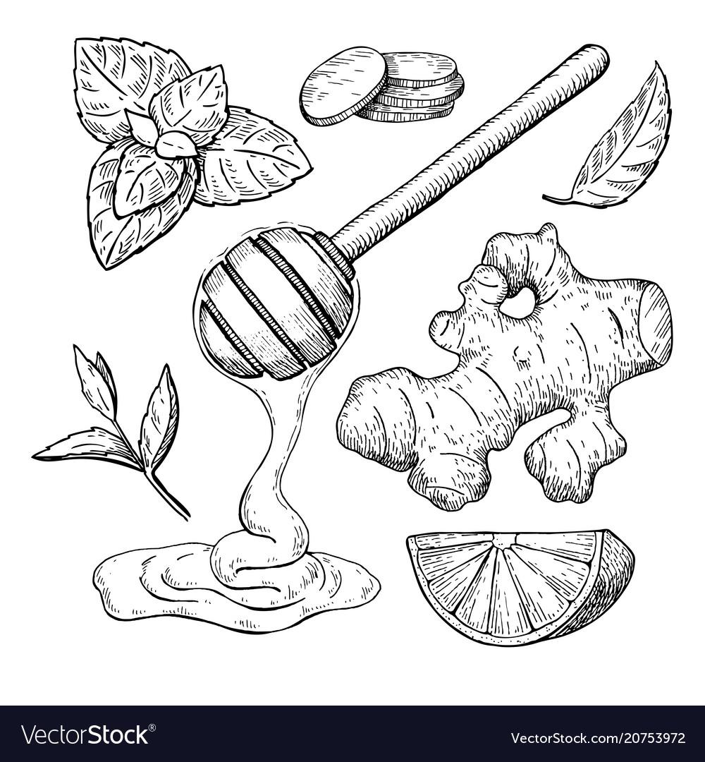 Honey ginger lemon and mint drawing jar vector image