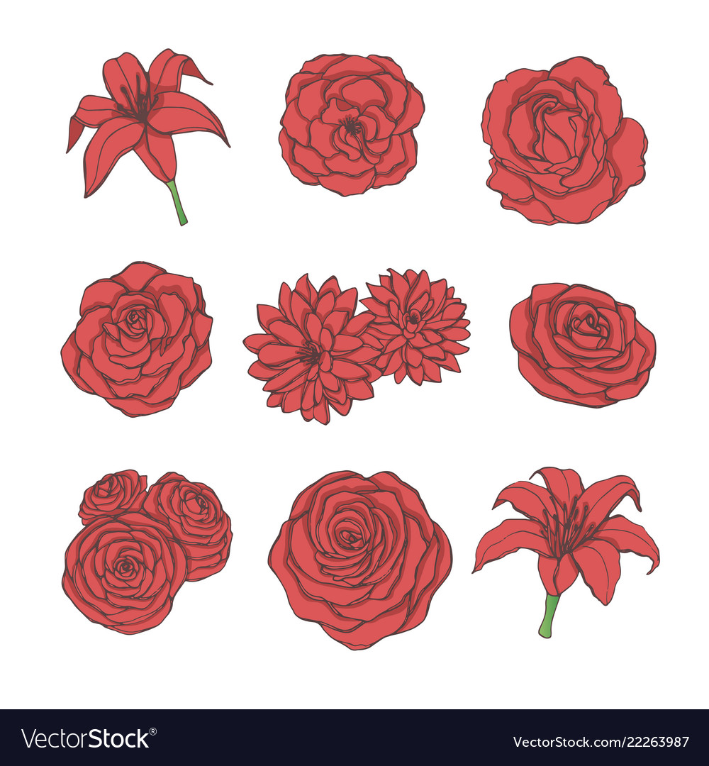 Hand drawn set of red rose lily peony flowers