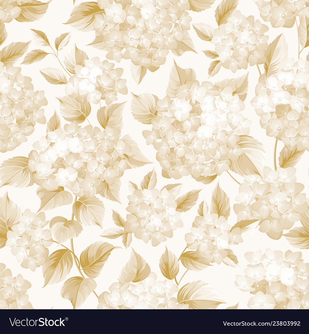 Blooming flower of golden hydrangea on white