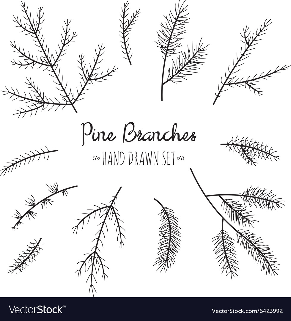 Hand drawn pine branches set vector image