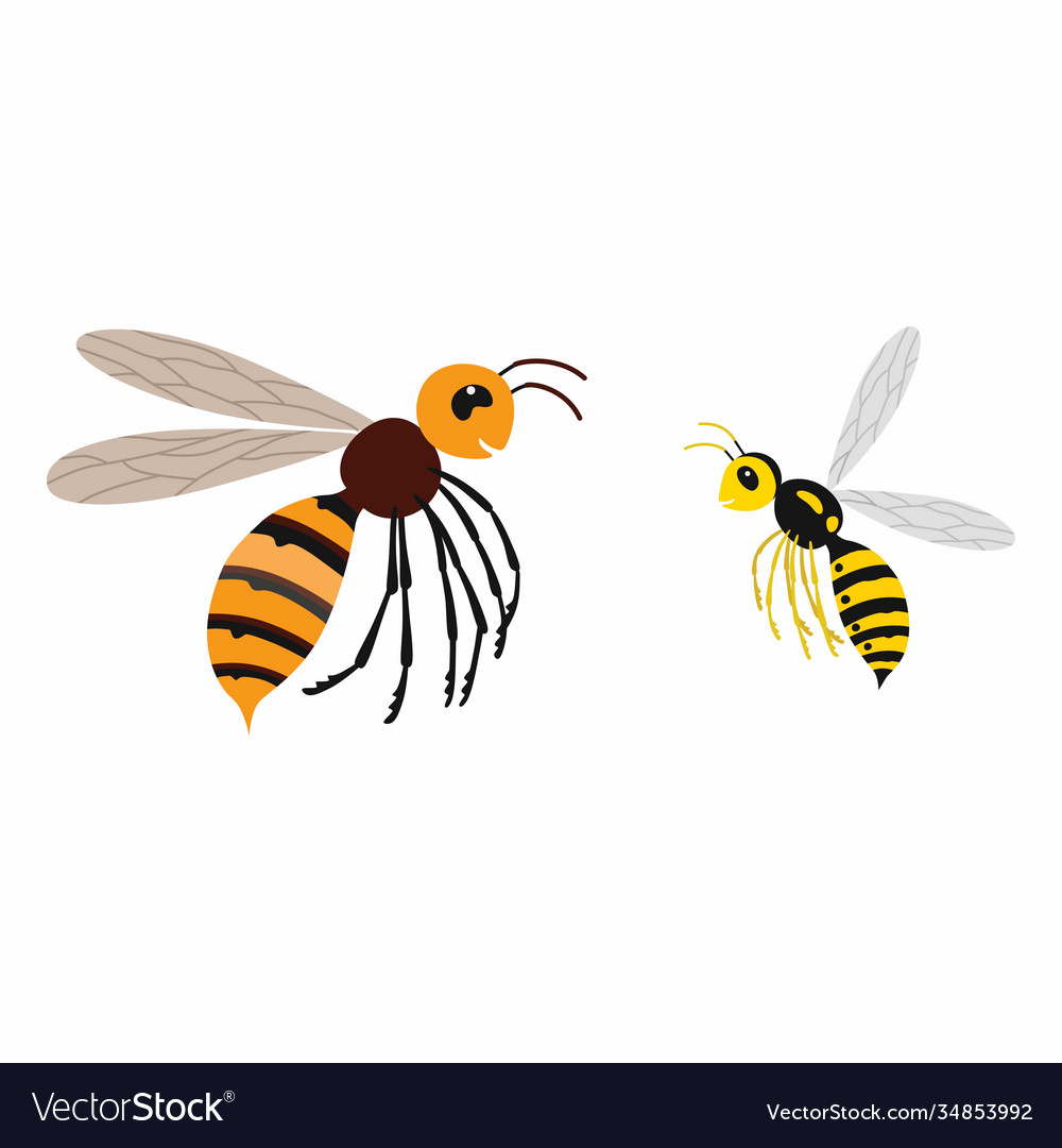 Hornet and wasp differences