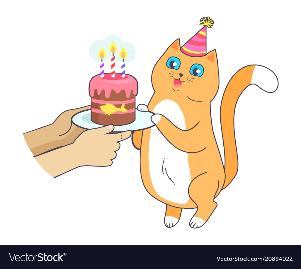 Cat has birthday party celebrate with cake