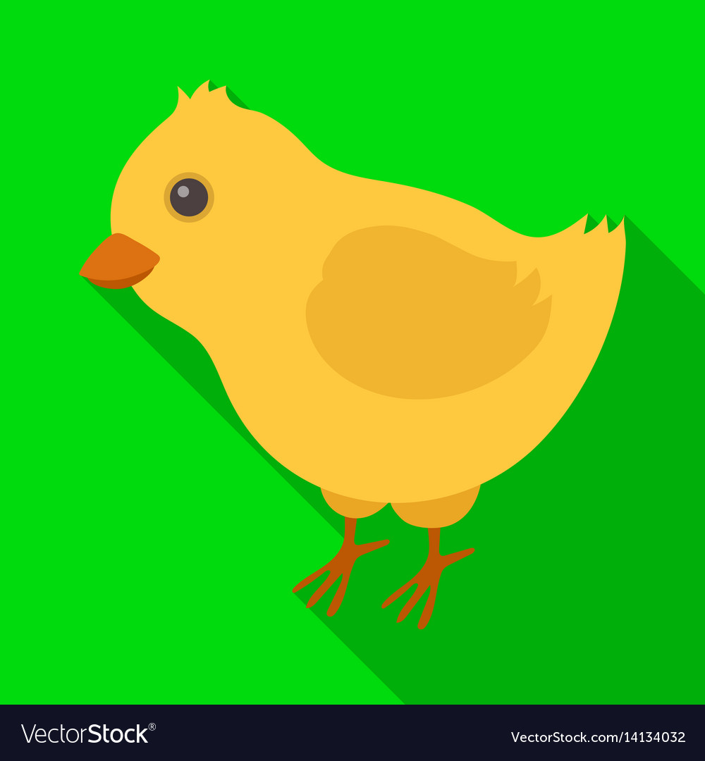 Yellow fluffy chick easter single icon in flat vector image