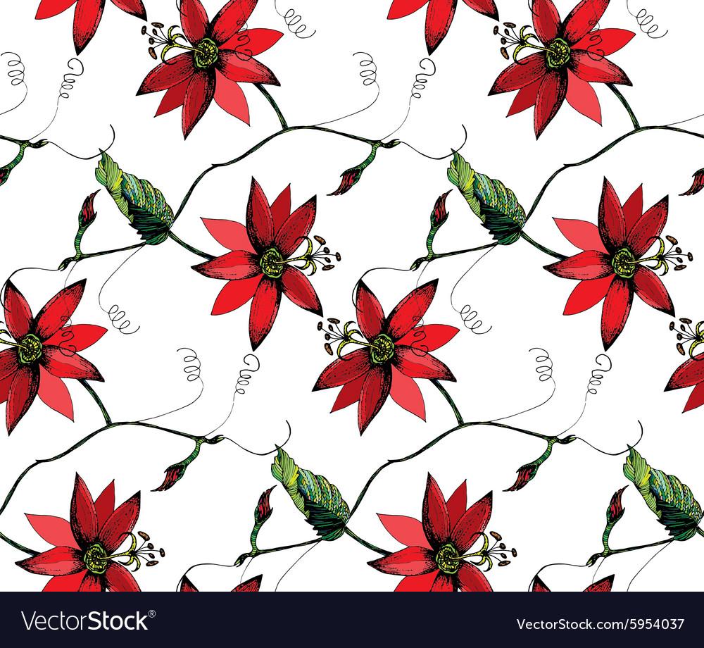 Passiflora Pattern2 Royalty Free Vector Image Vectorstock