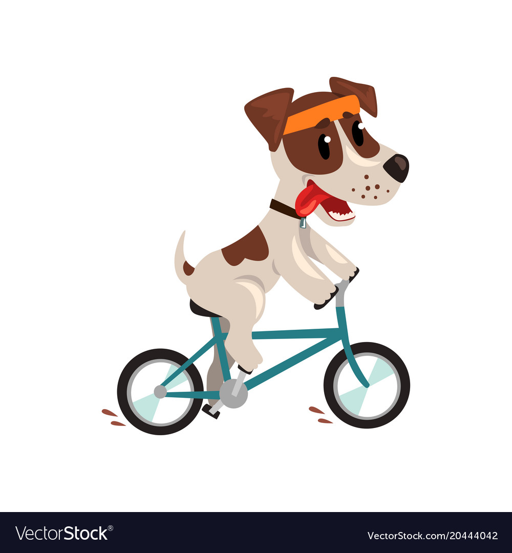 Cute jack russell terrier athlete riding a bike vector image