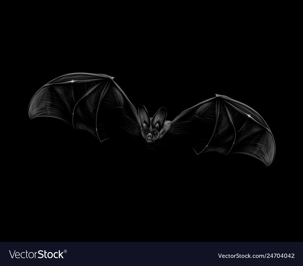 Portrait a bat in flight on a black background vector