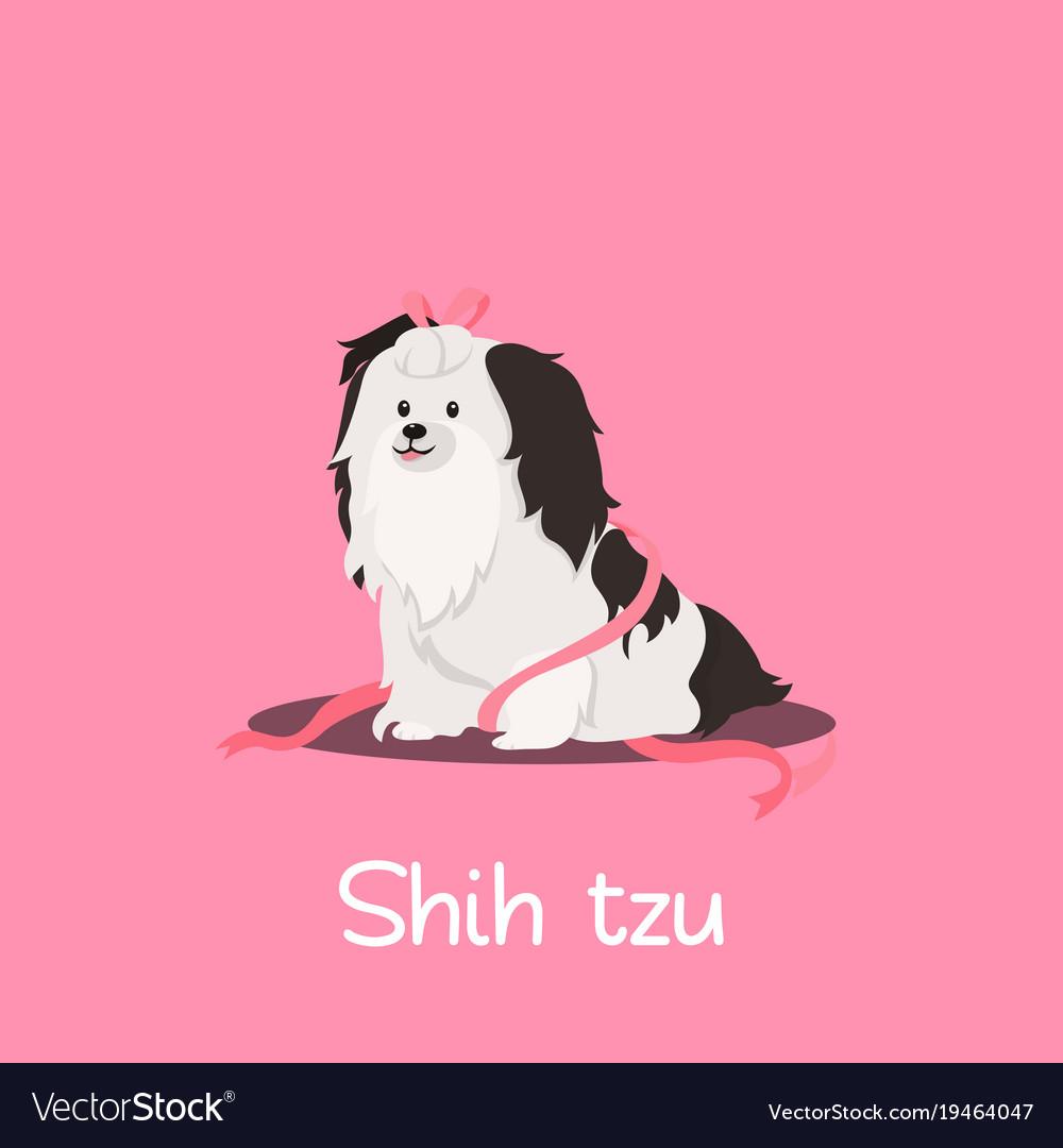 A cute shih tzu dog on pink background