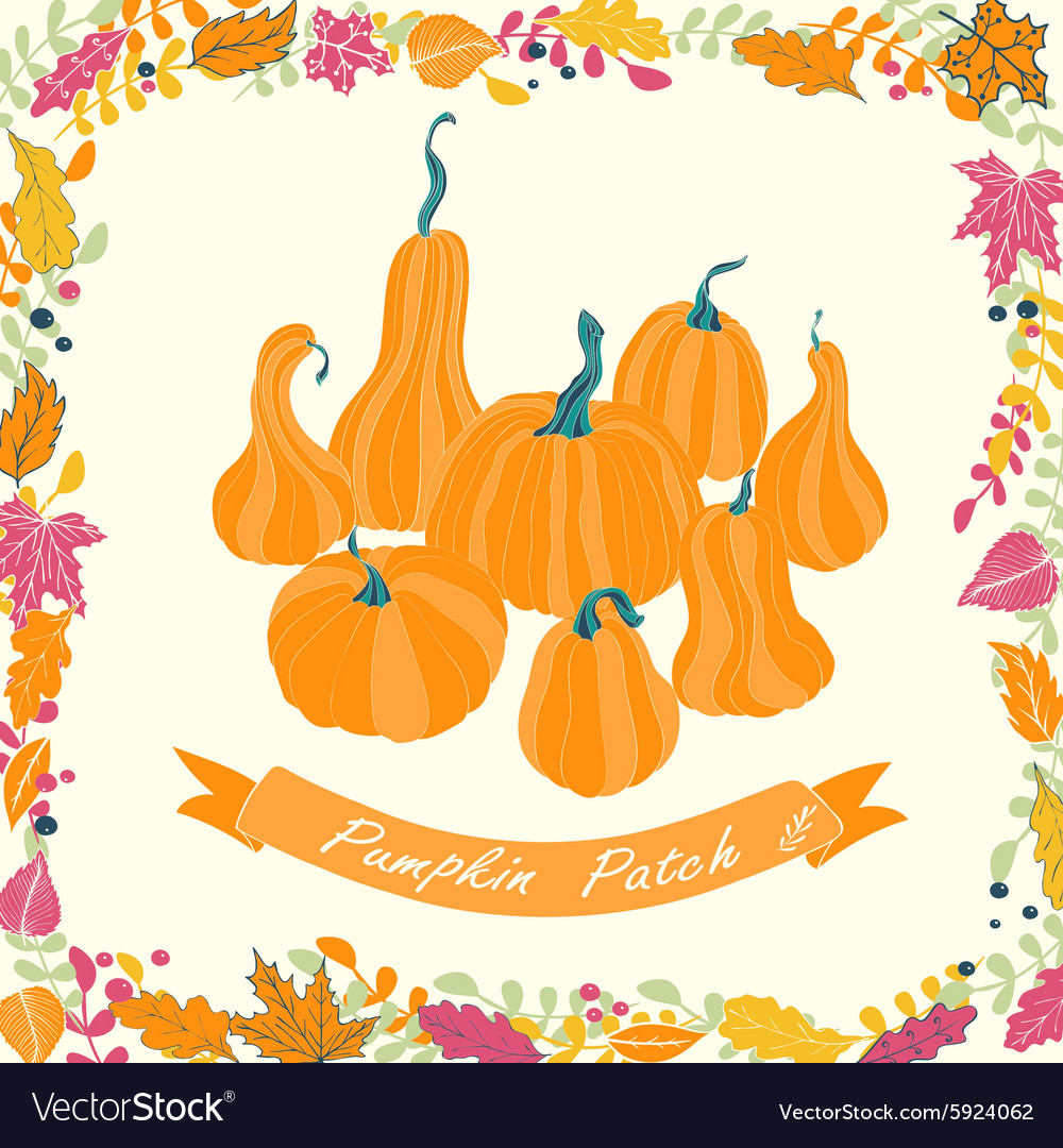 Pumpkin patch card design vector image