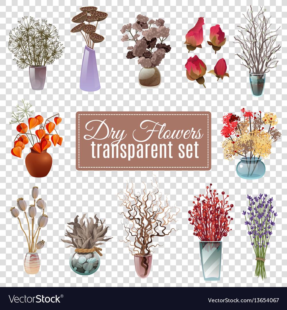 Dry flowers transparent set
