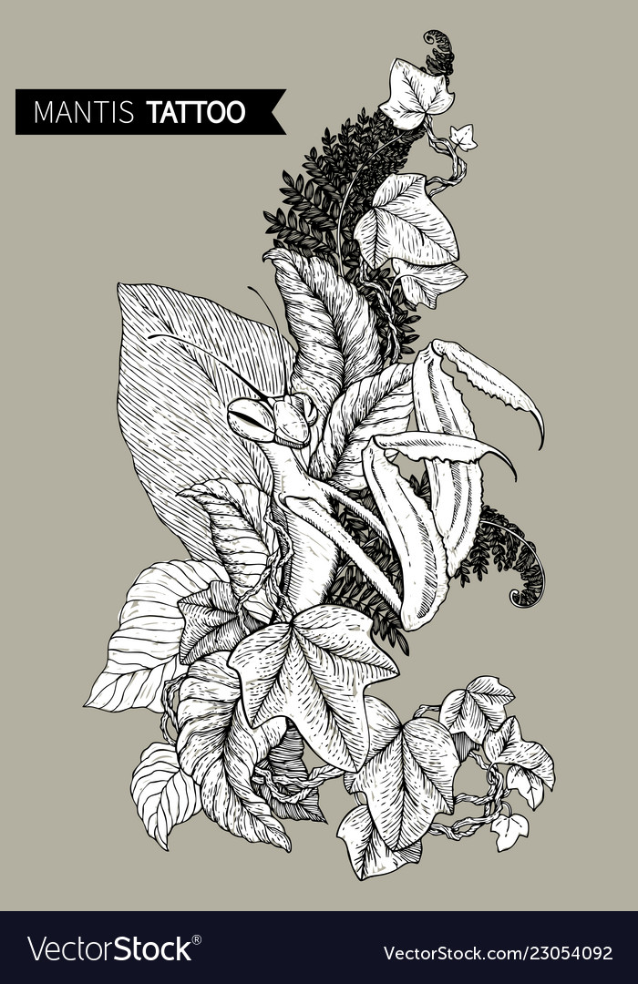 Graphic decorative image of the mantis the linear