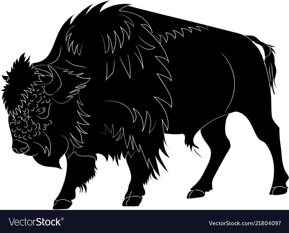 American buffalo or bull