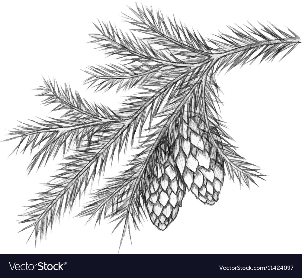 Realistic vintage engraving wreath of fir branches