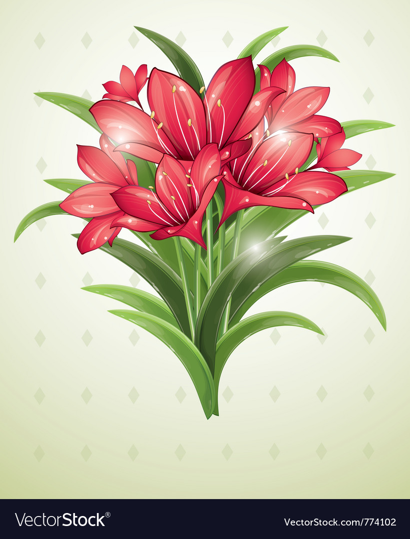 Bunch Of Red Lilies Royalty Free Vector Image Vectorstock