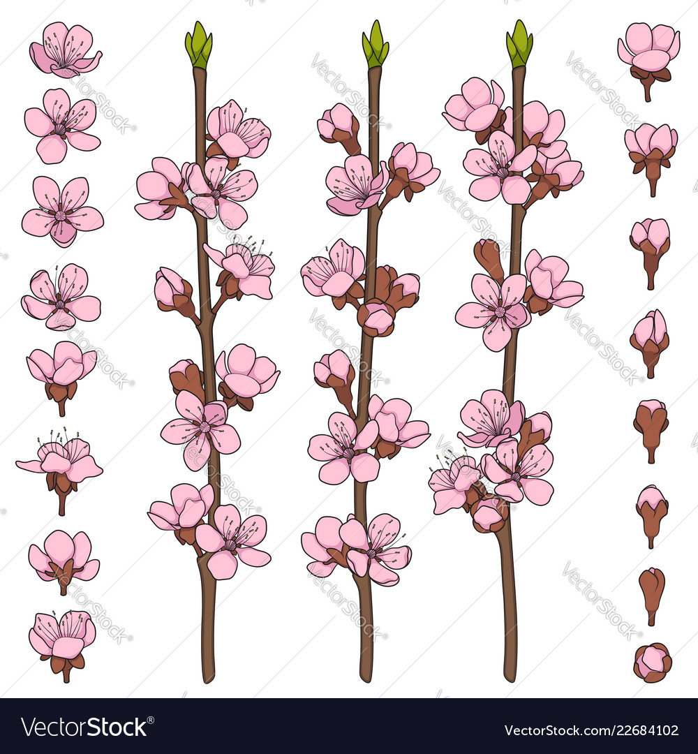 Set of color images with blossoming branches