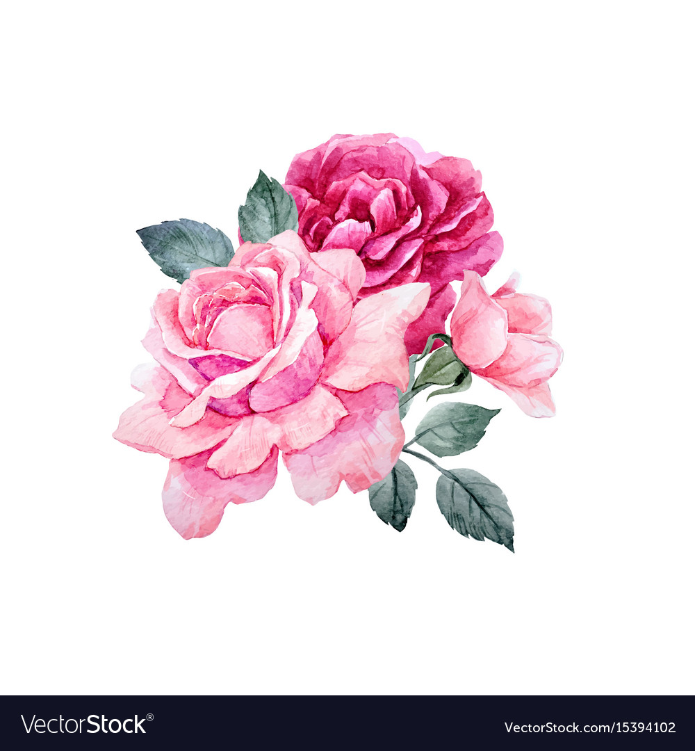 watercolor roses composition royalty free vector image