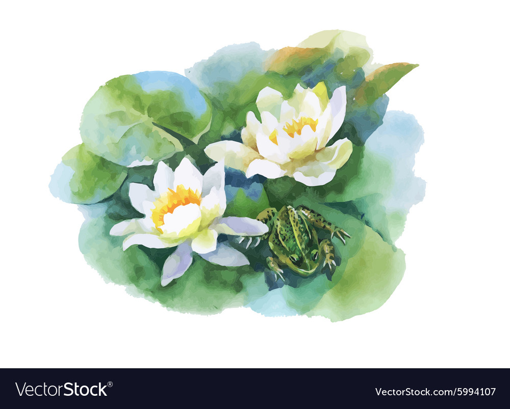 Watercolor White Water Lilly Flowers Pattern With Vector Image