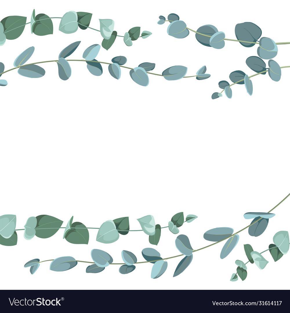 Eucalyptus border pattern on white background