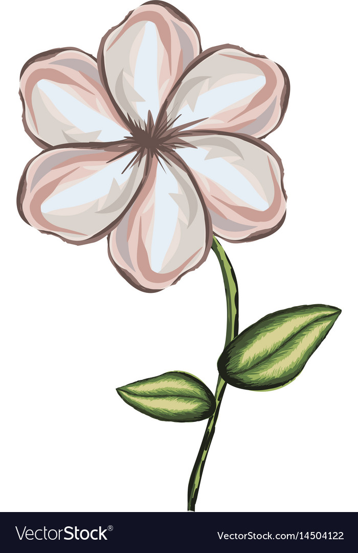 White background of watercolor malva flower with Vector Image