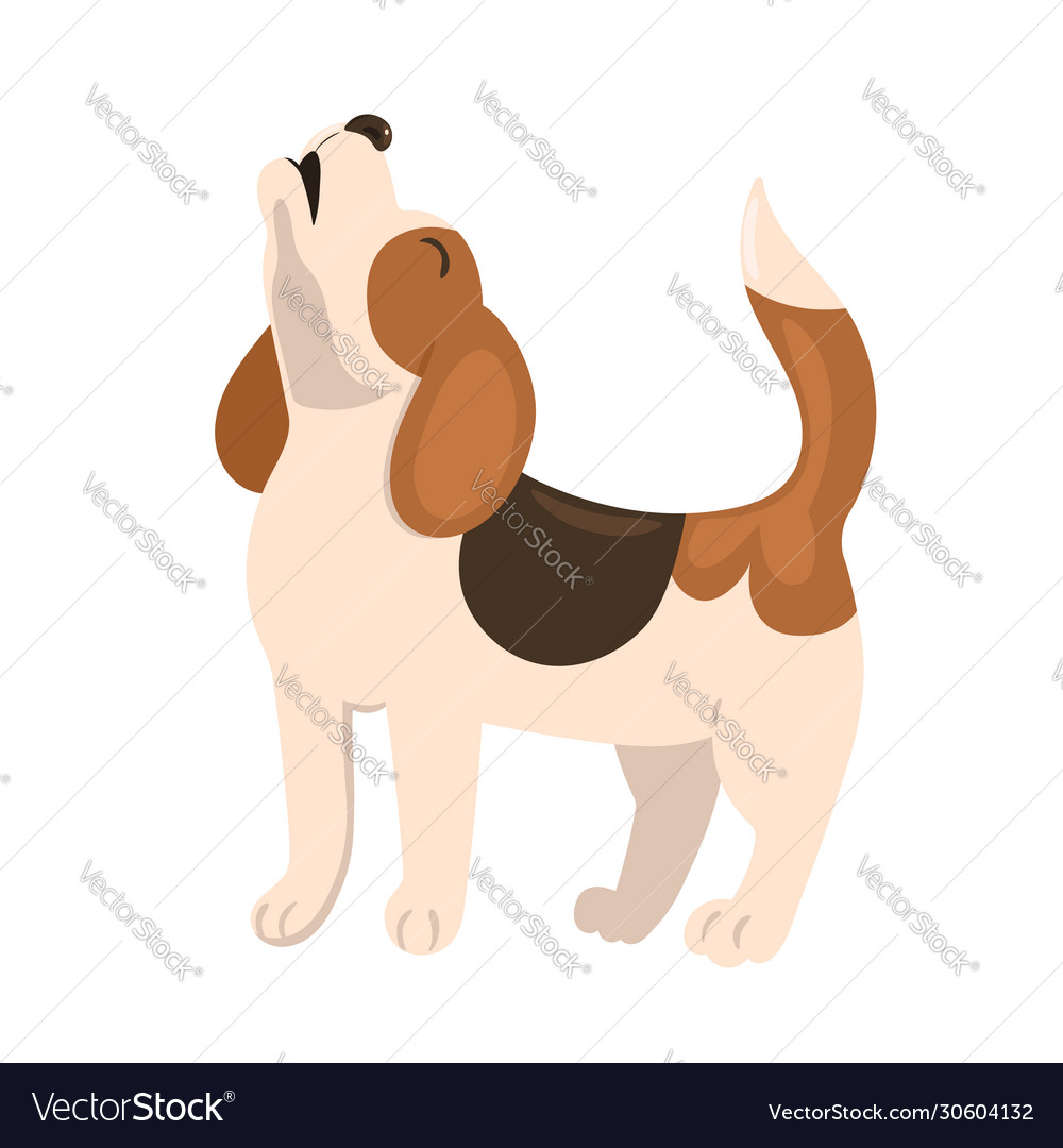 Beagle Puppy Howls Isolate On A White Background Vector Image