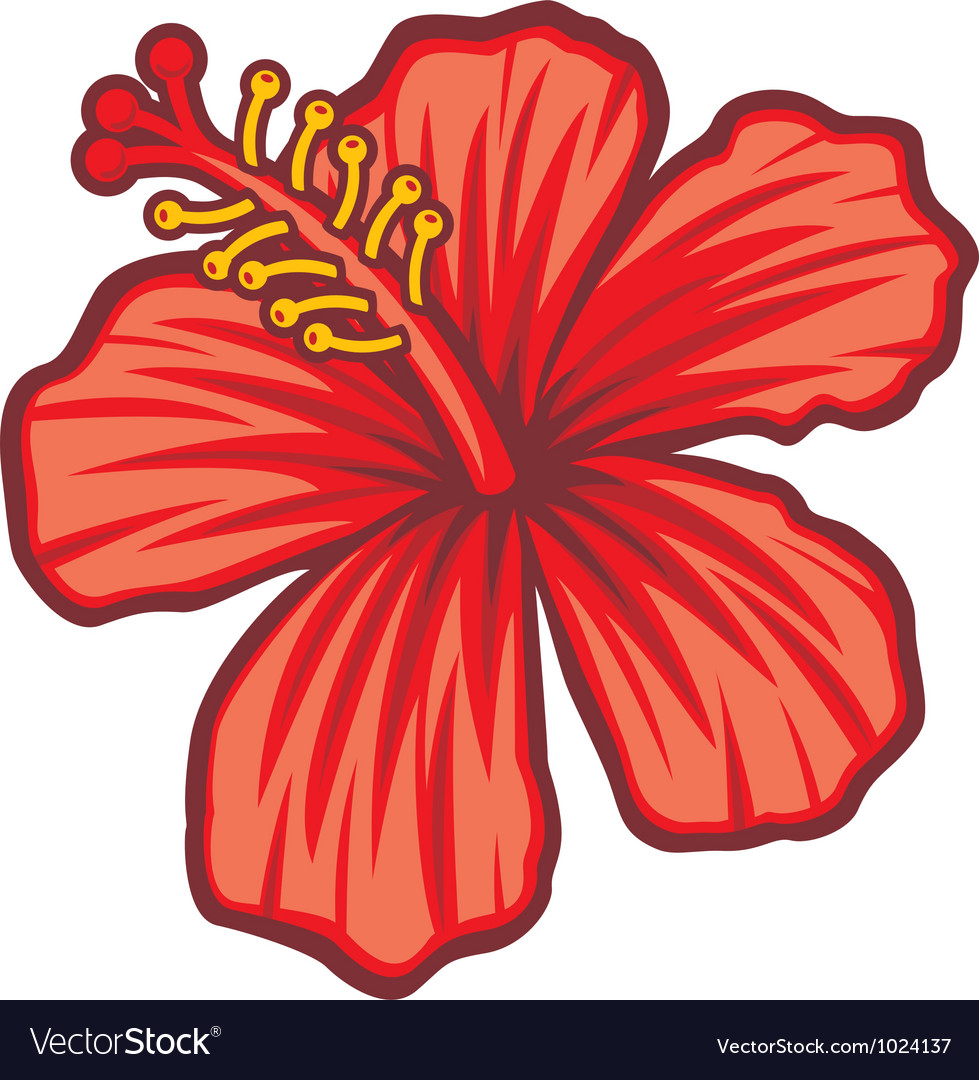 Beautiful Red Hibiscus Flower Royalty Free Vector Image
