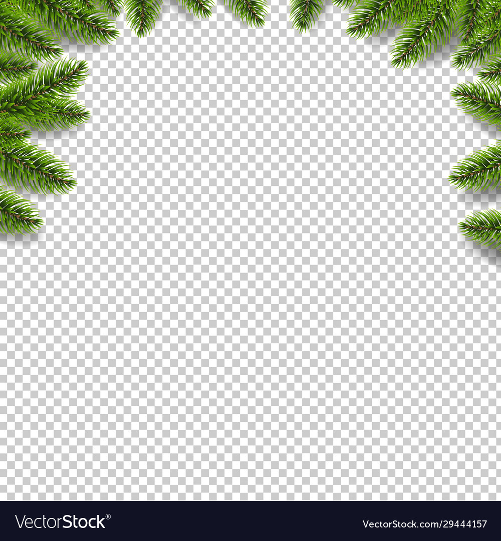 Green fir tree border isolated transparent