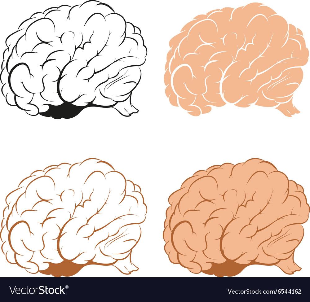 Set of Brains