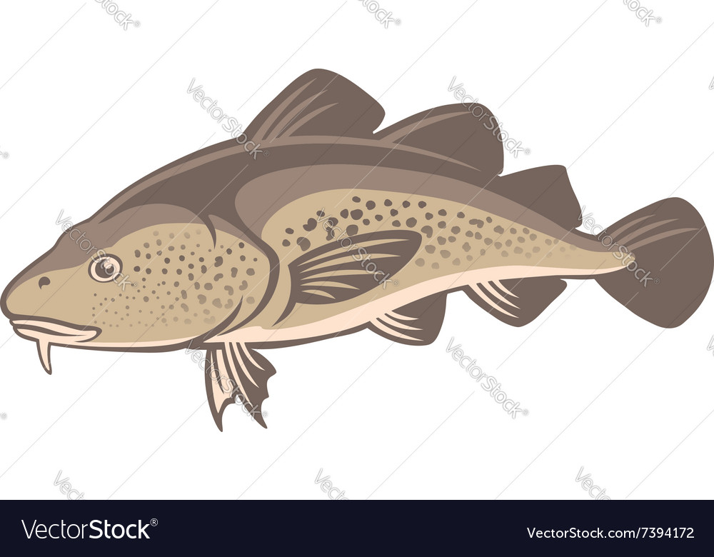 Cod fish vector image
