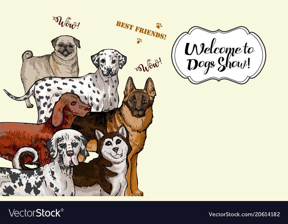 Dogs sketches dogs of different breeds vector image