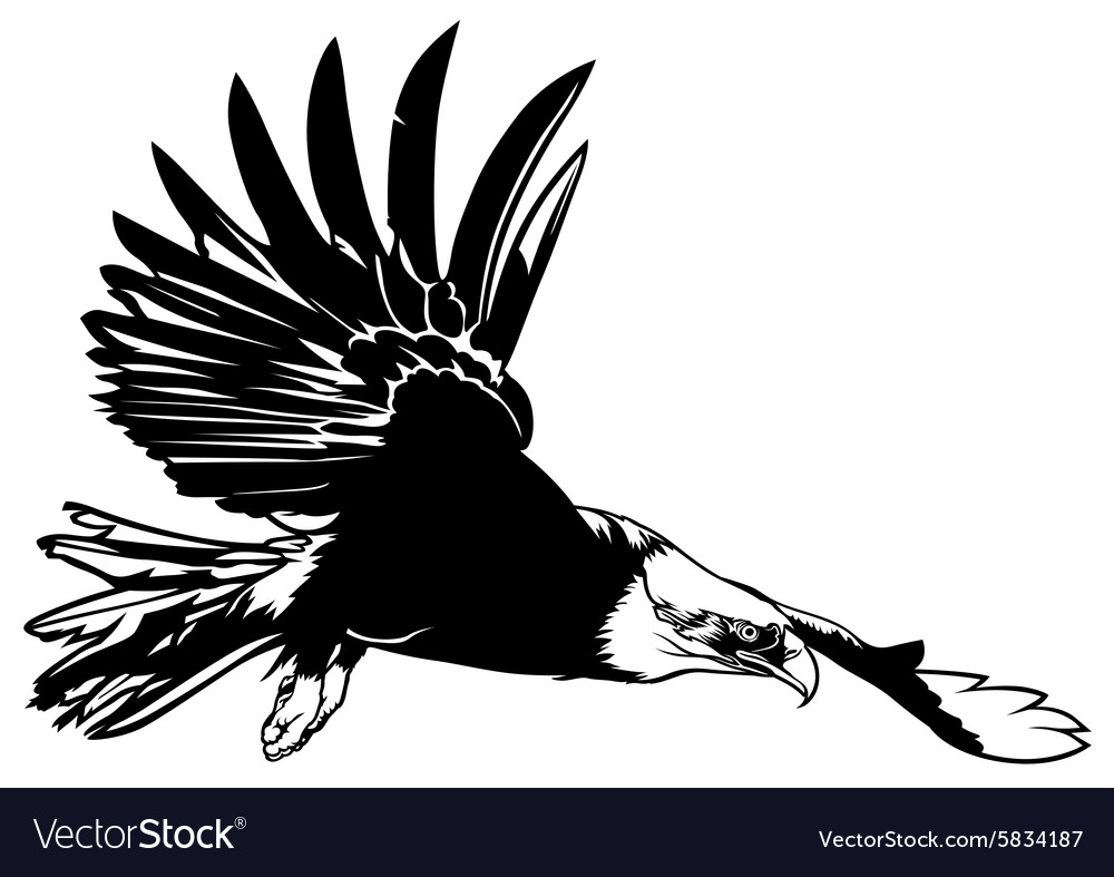 flying bald eagle royalty free vector image vectorstock rh vectorstock com bald eagle vector free download bald eagle vector brush photoshop