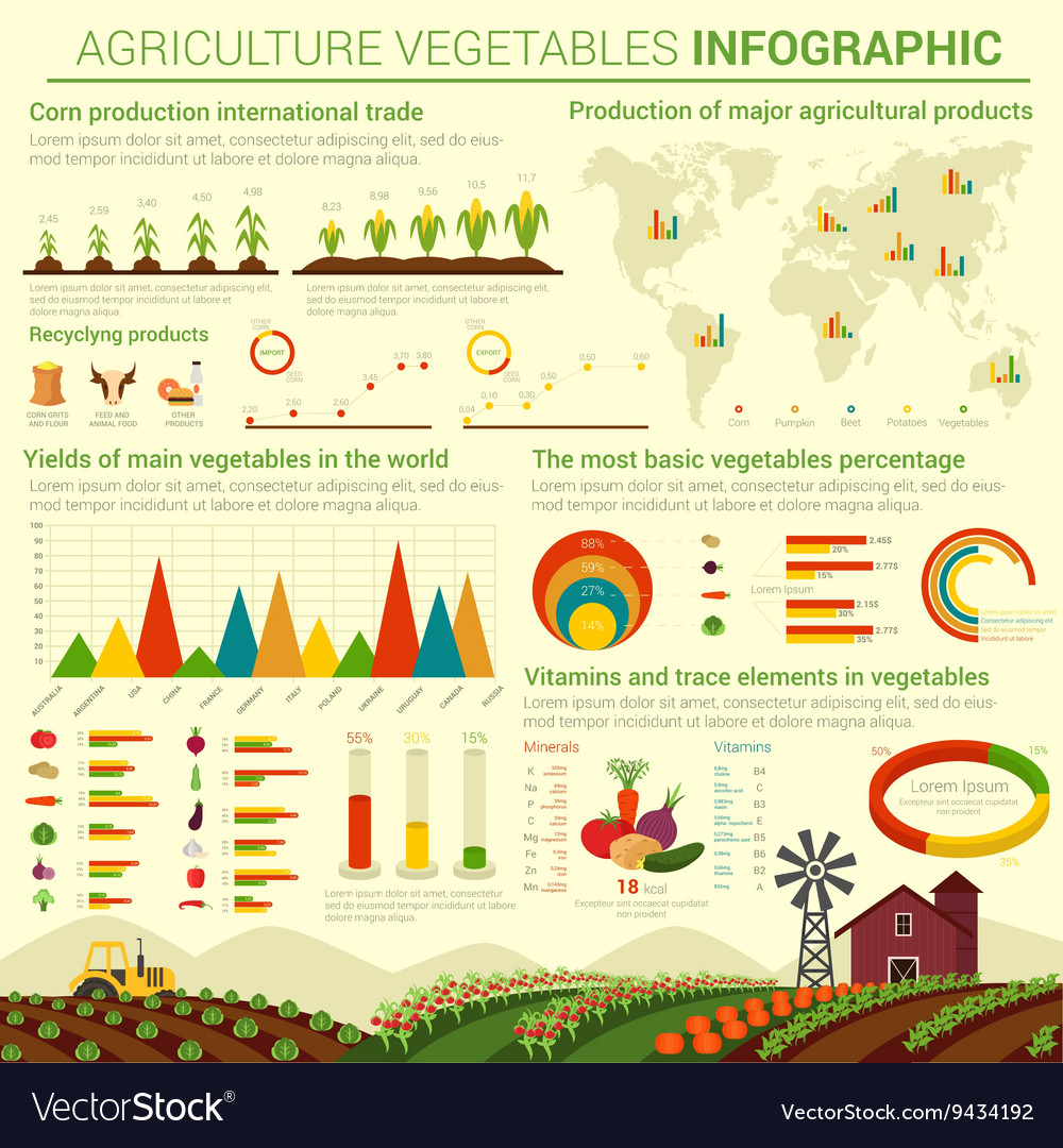 Infographic template for agriculture vegetables