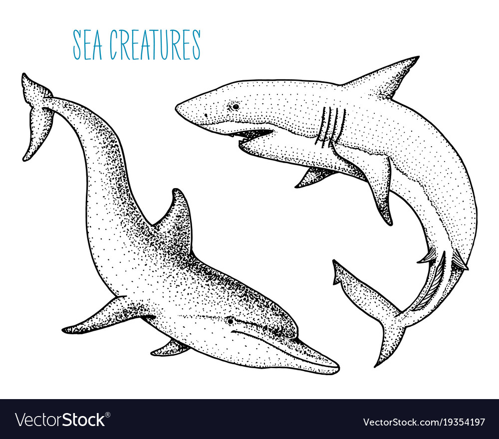 Sea creature dolphin and white shark engraved