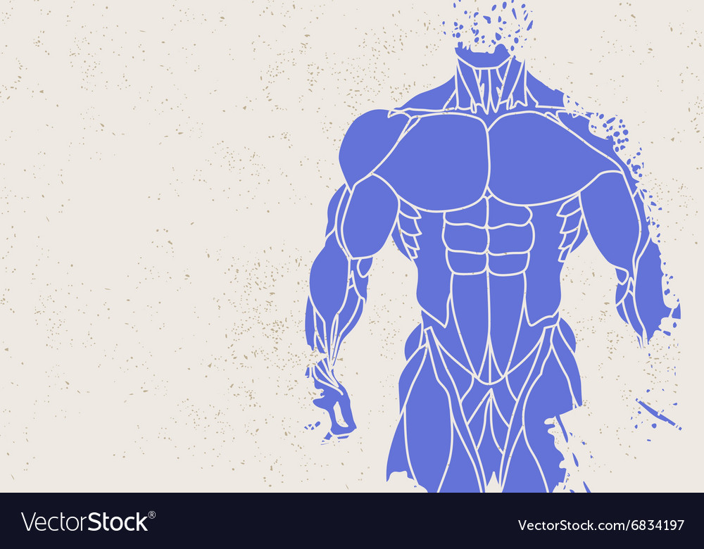 Silhouette Of A Mans Torso Royalty Free Vector Image