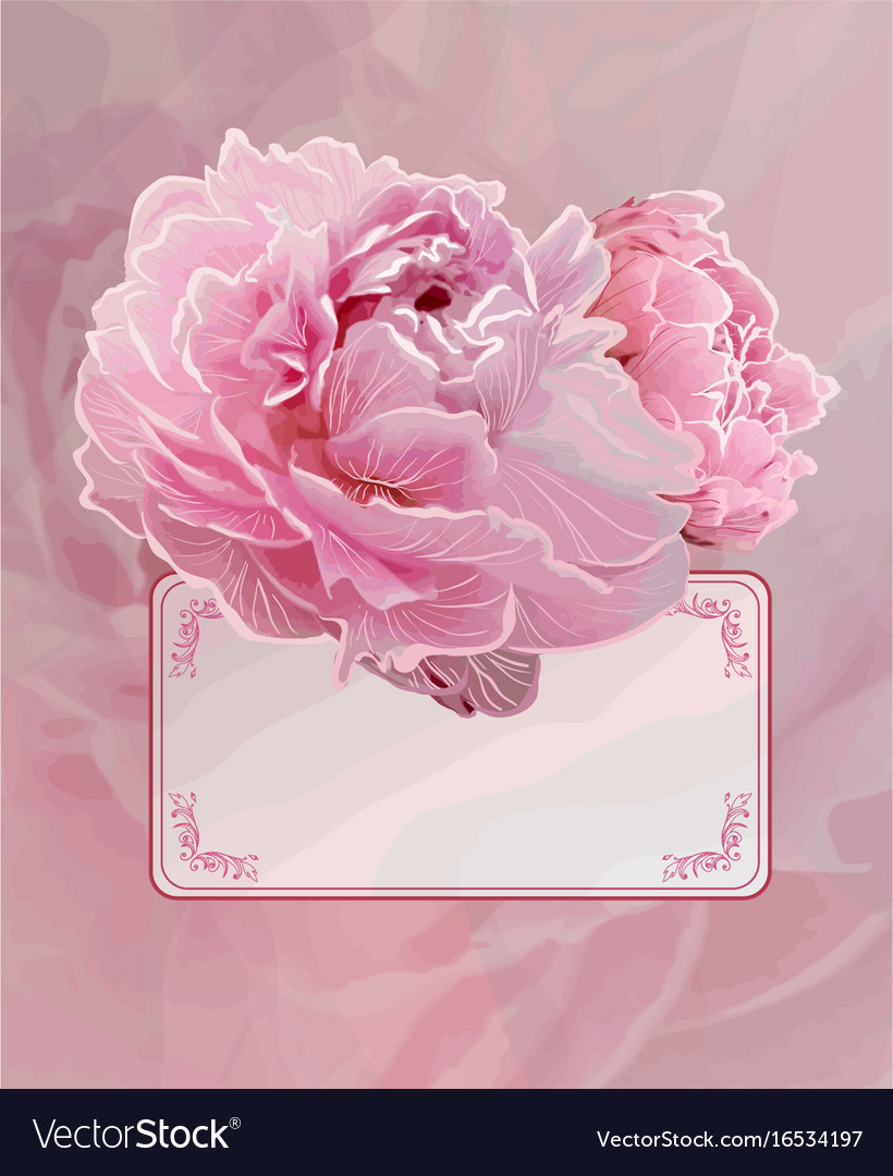 Vintage background with pink peony flowers vector image mightylinksfo
