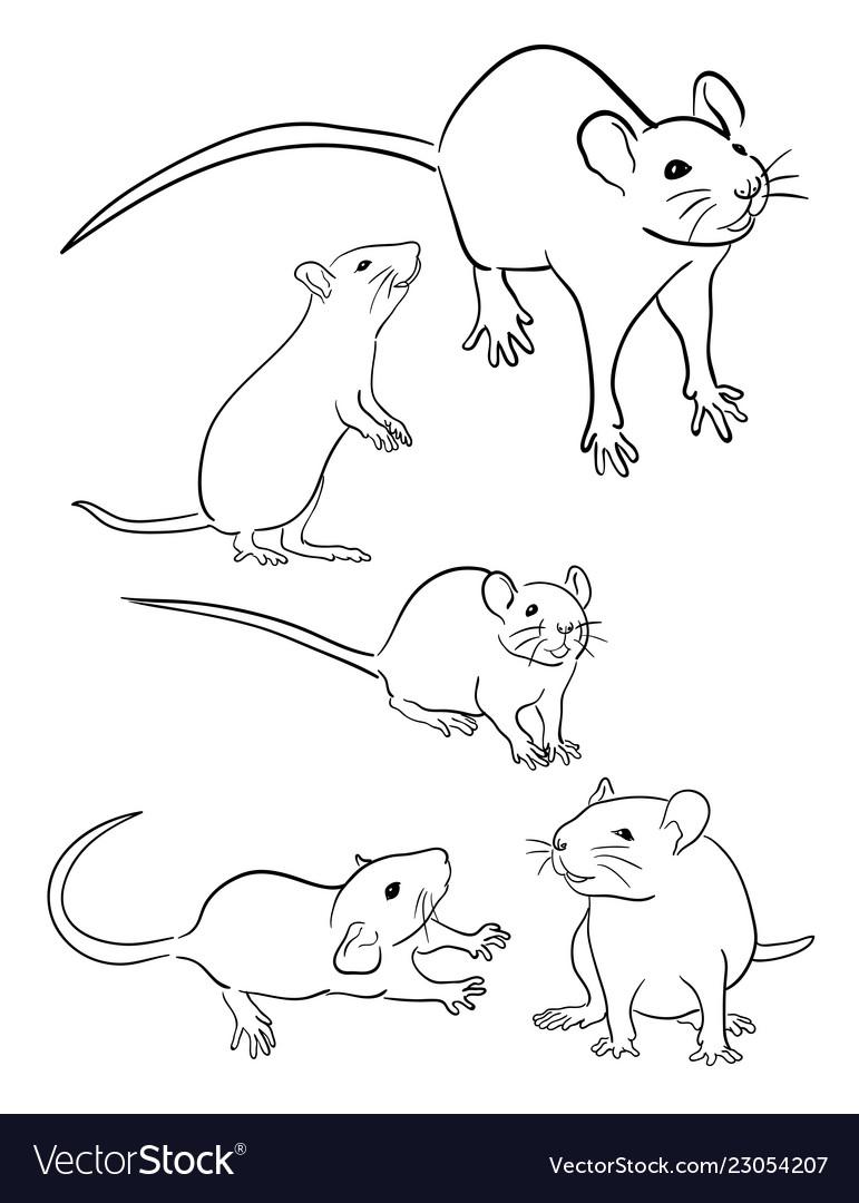 Mice line art 03