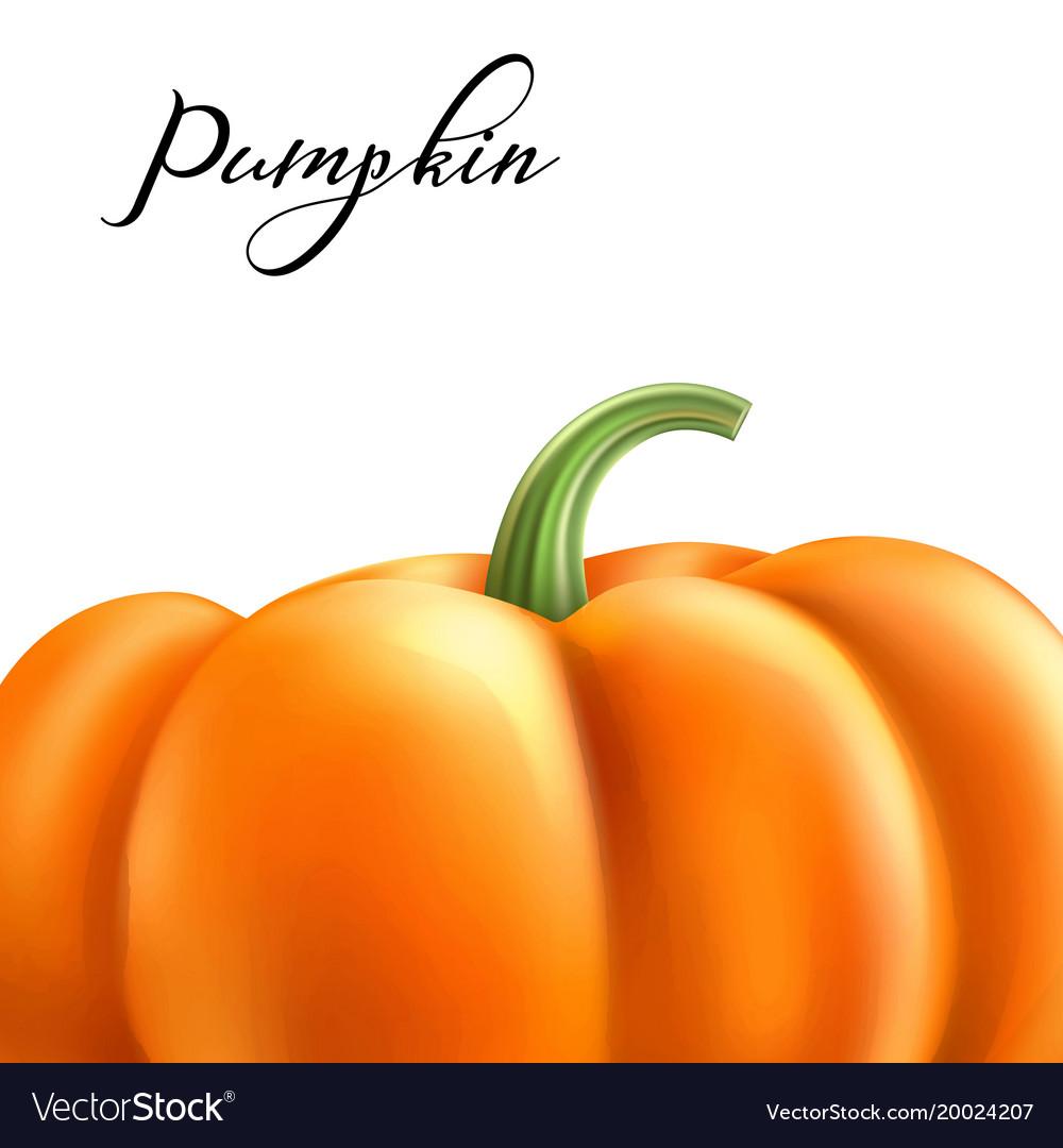 Realistic pumpkin halloween thanksgiving vector image