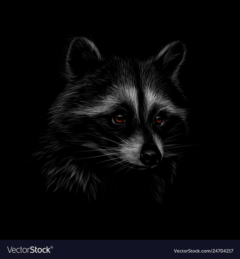 картинка енота на черном фоне самых