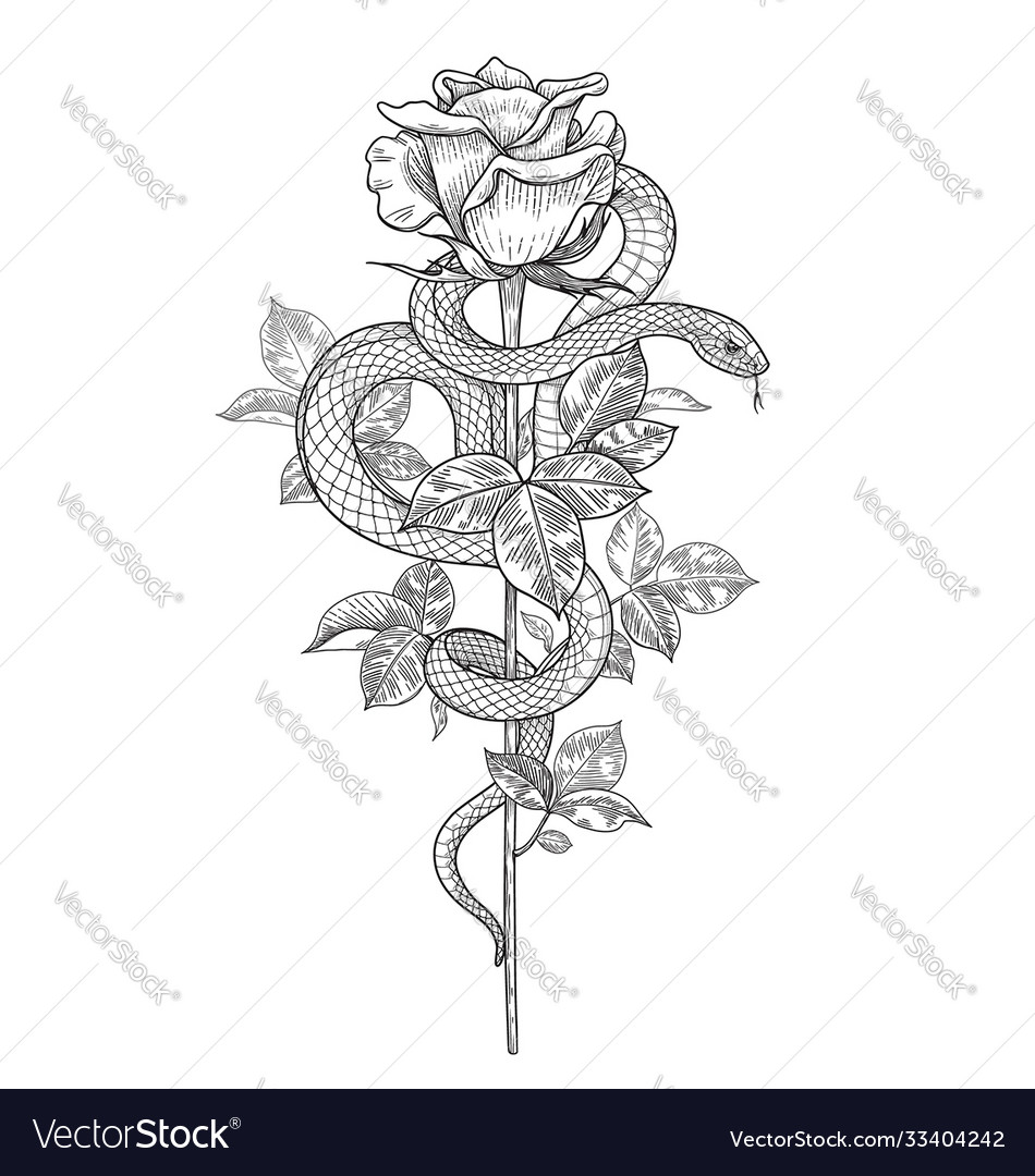 Twisted snake and rose bud