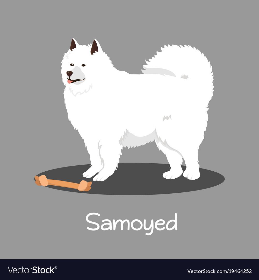An Depicting Samoyed Dog Cartoon Royalty Free Vector Image