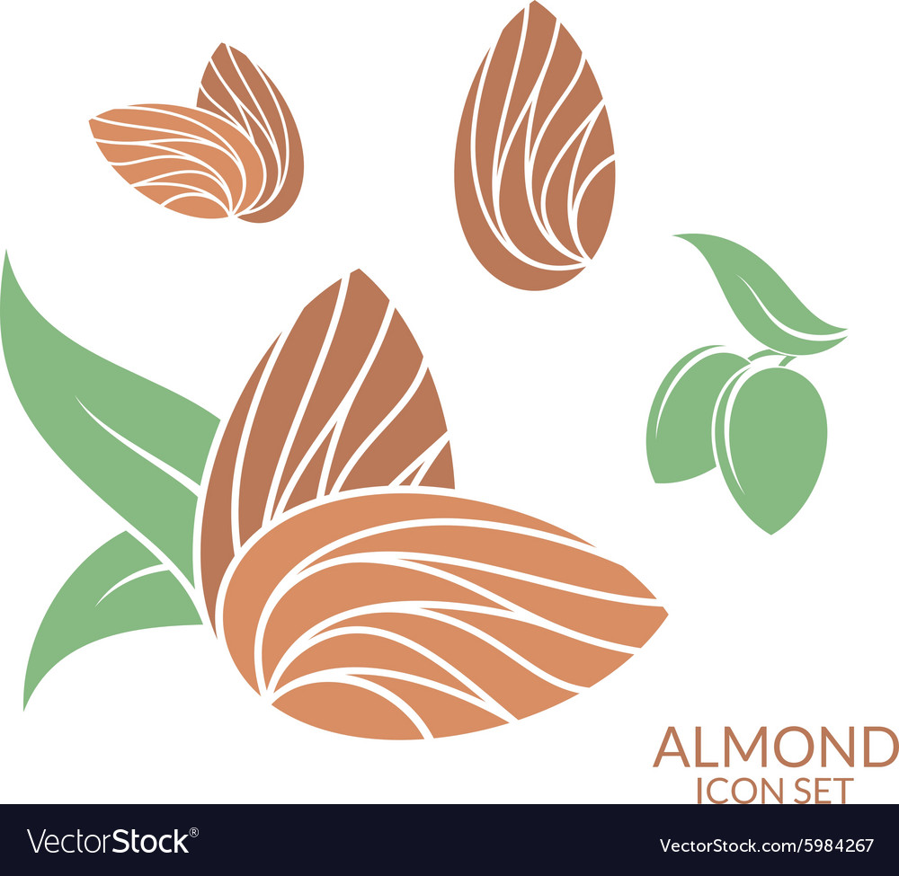 Almond Icon set Isolated fruit on white