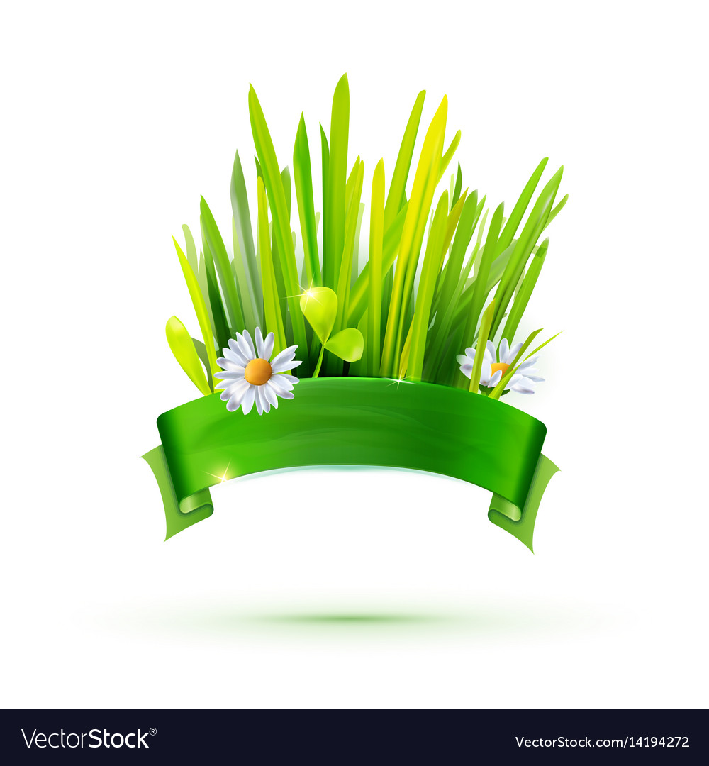 Green grass and ribbon label vector image