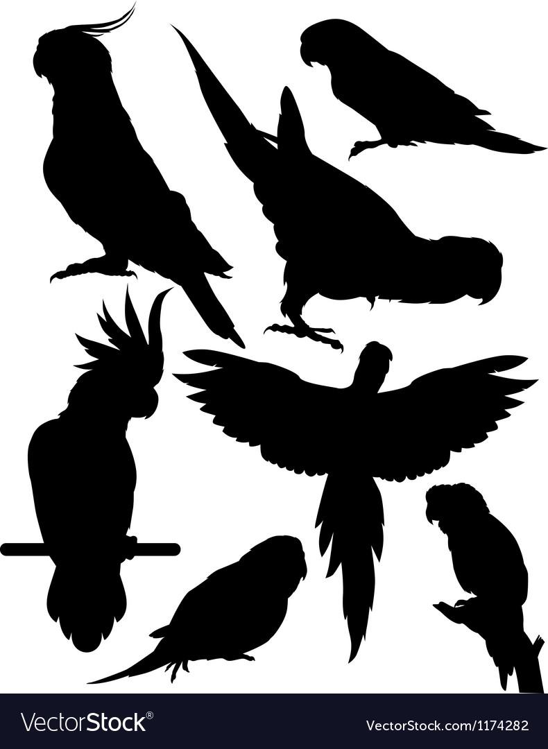 Silhouettes parrots