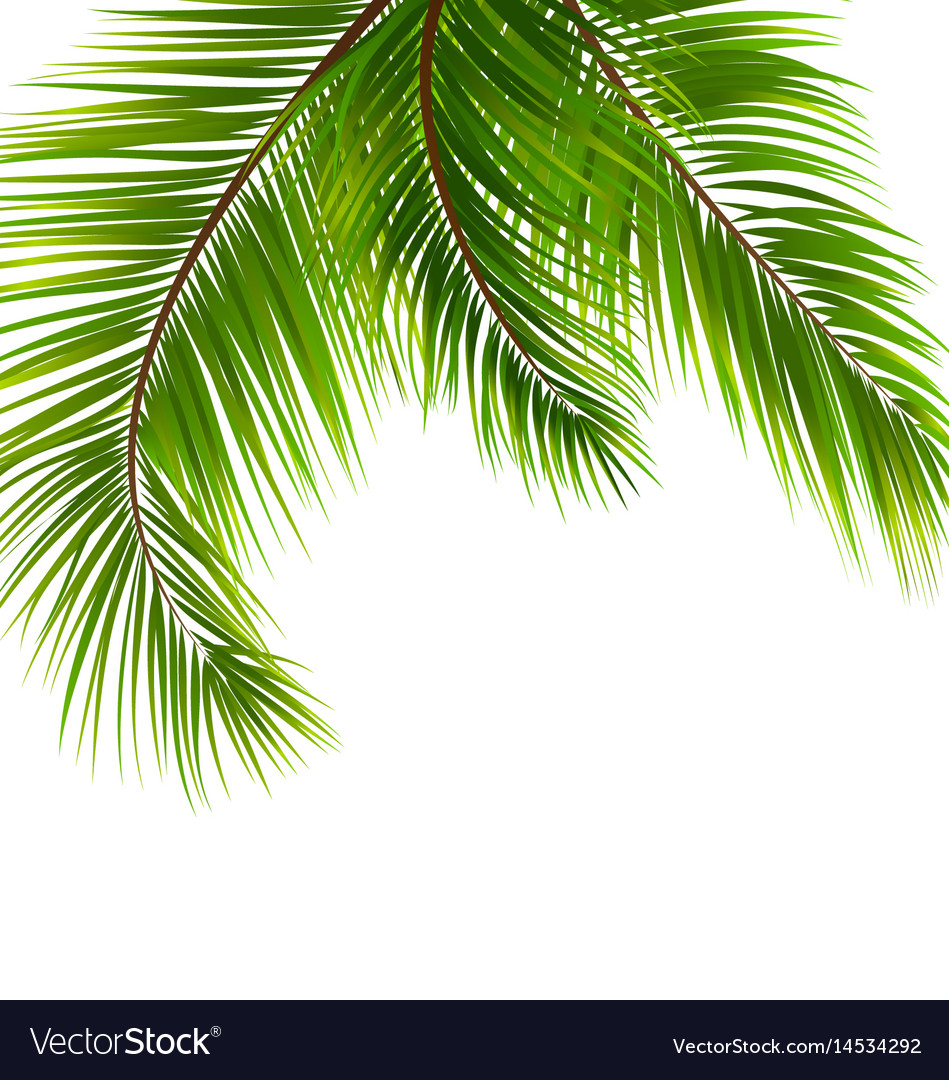 Exotic Tropical Background With Palm Leaves Vector Image Freepik free vectors, photos and psd freepik online editor edit your freepik templates slidesgo free templates for presentations stories free editable illustrations. vectorstock