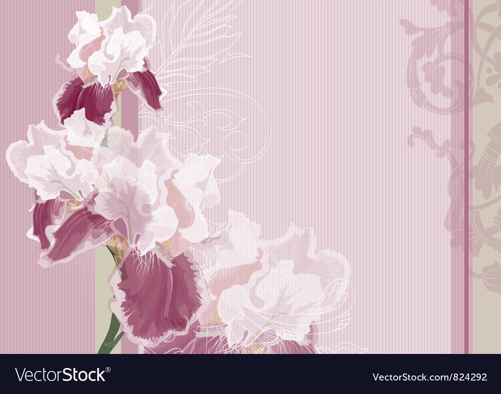 Irises on a pink background