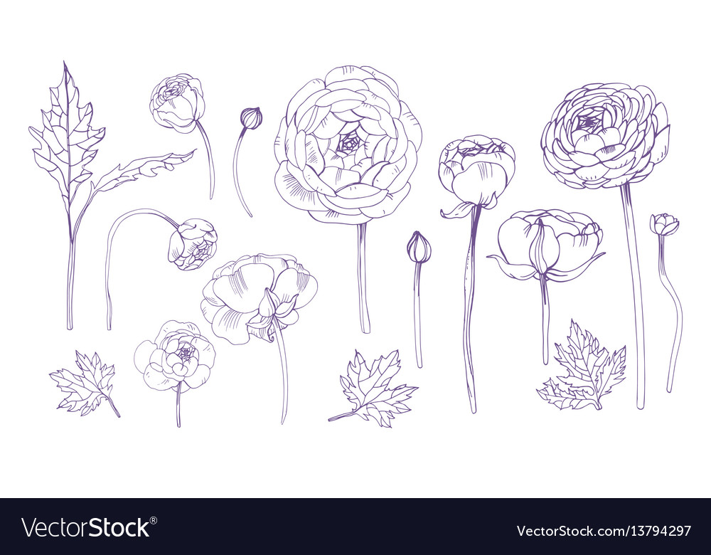 Hand drawn outline floral elements set collection