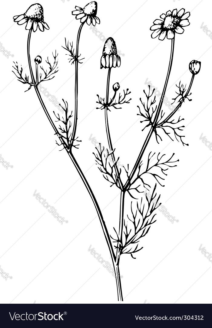 Plant matric aria