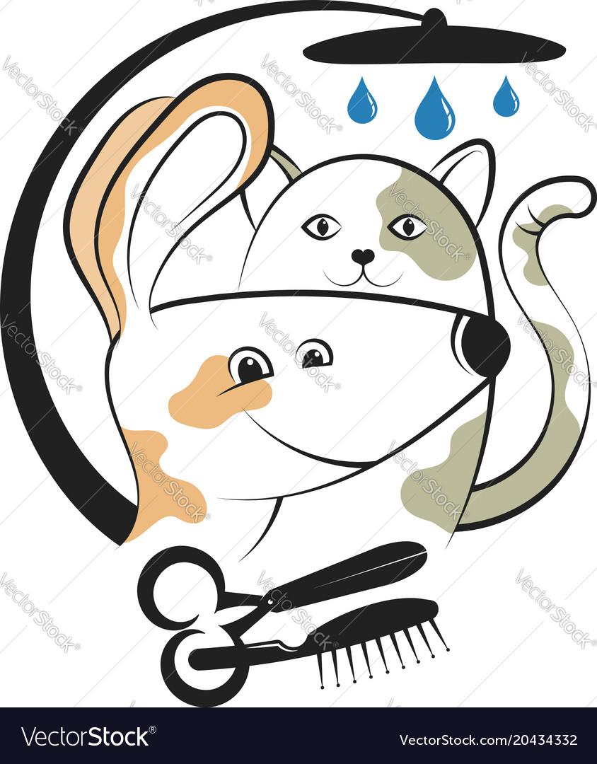 Haircut and washing animals