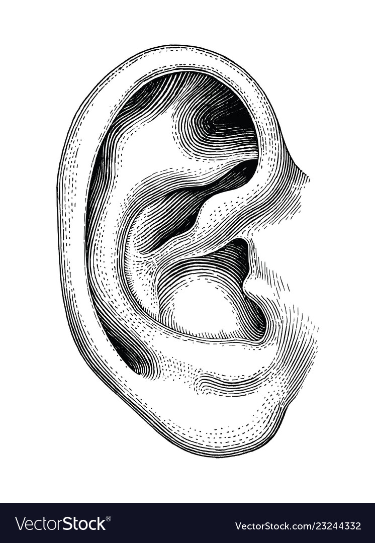 Human ear hand draw vintage clip art isolated on