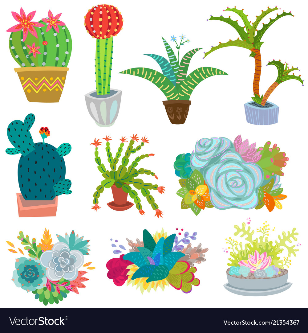 Cactus botanical cacti potted cute