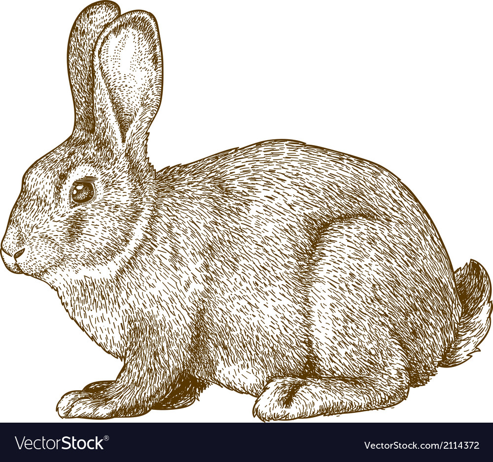 Engraving rabbit vector image