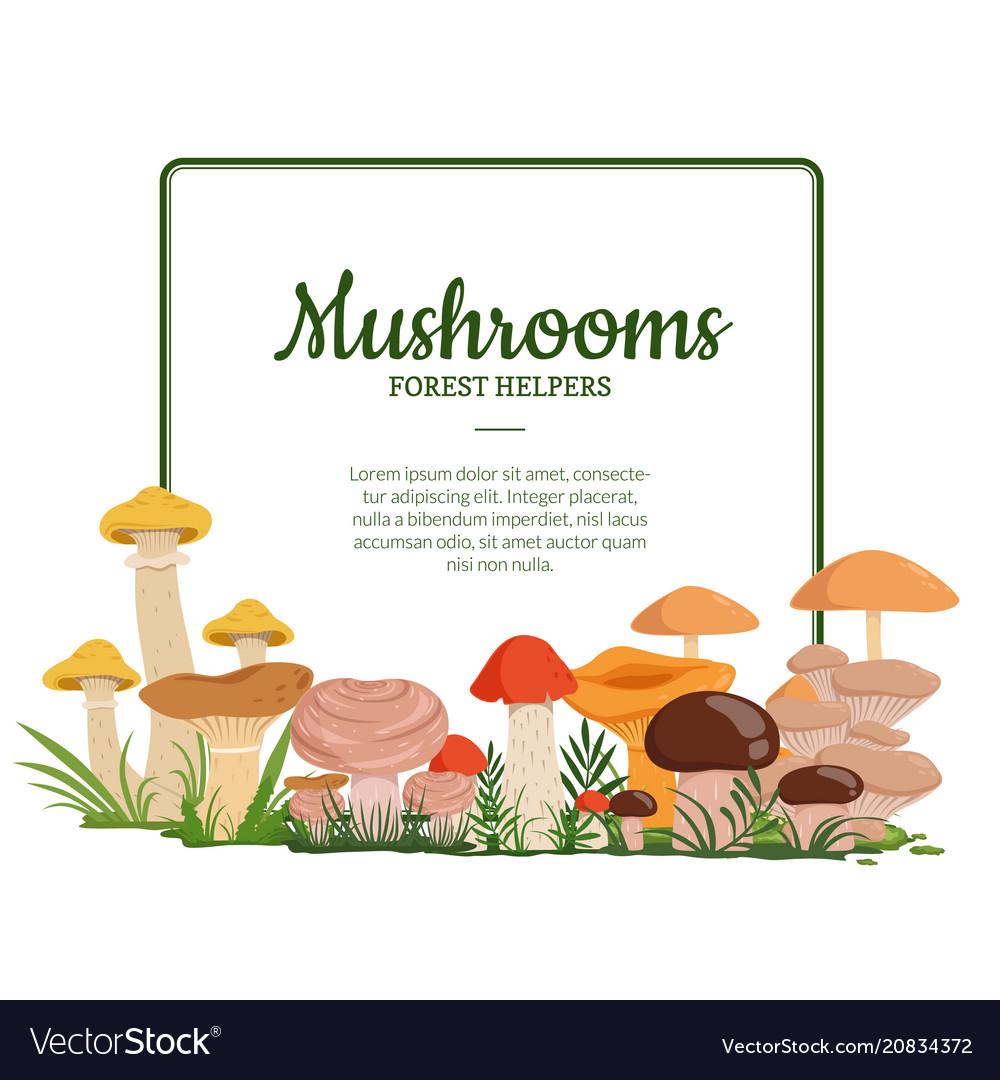 Frame with cartoon mushrooms vector image